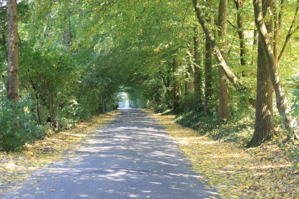 Allee in Lembeck